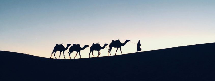 Were There No Camels During the Time of Biblical Patriarchs?